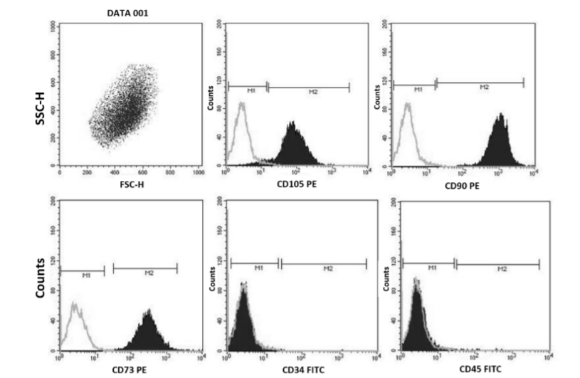 Immunophenotypic bone marrow characteristics of hMSCs examined by flow cytometry: positive for CD105, CD90, CD73 and negative for CD34 and CD45.