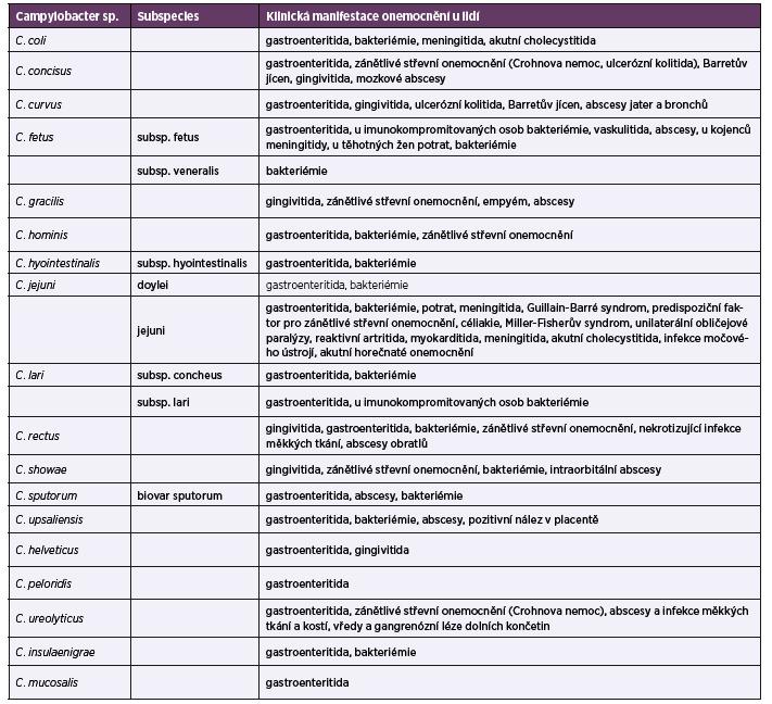 <i>Campylobacter</i> spp., druhy způsobující klinická onemocnění u lidí a jejich klinická manifestace, zpracováno z několika různých zdrojů [6, 9–11]<br> Table 1. <i>Campylobacter</i> spp. causing clinical diseases in humans and their clinical manifestations, taken from various sources [6, 9–11]
