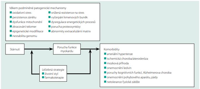 Vztah mezi věkem podmíněnými procesy myokardu, komorbiditami a možnostmi terapeutického zásahu. Upraveno podle (26)