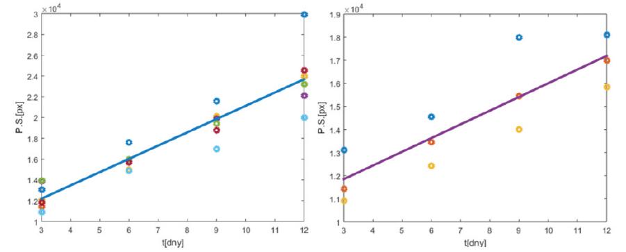 ,2.: Dynamický trend evoluce periosteálního svalku, kalkulovaný na základě výsledků z tab. 2 pro pracovní skupinu (vlevo) a kontrolní skupinu (vpravo)